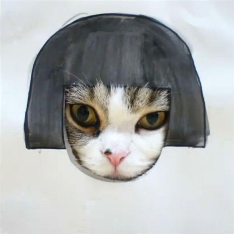 famecats03 Пять самых известных котов интернета