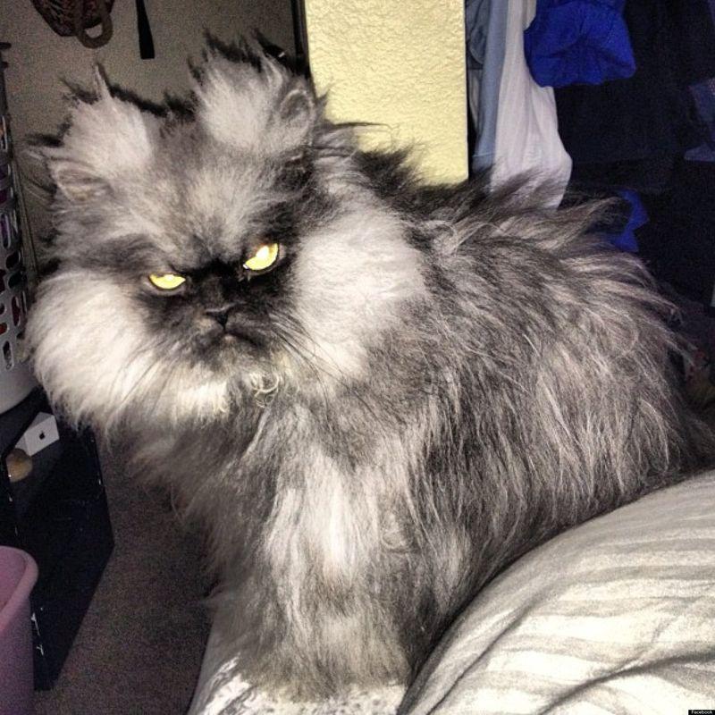 famecats04 Пять самых известных котов интернета