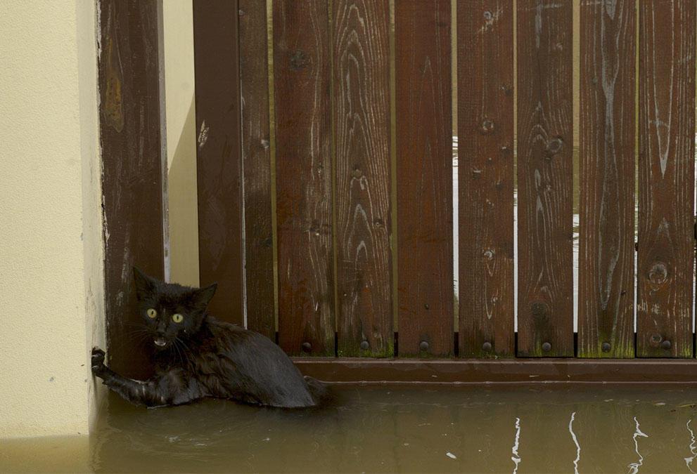 flooding091 Наводнение в Центральной Европе