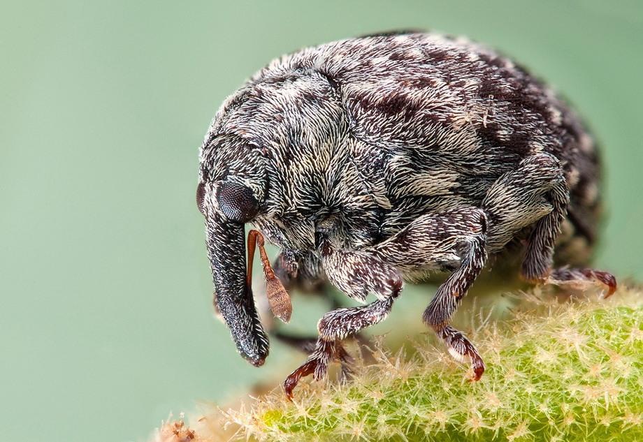 insects10 Портреты насекомых
