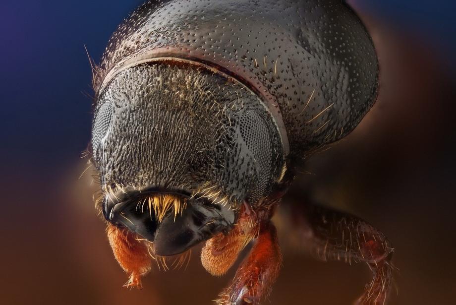 insects15 Портреты насекомых