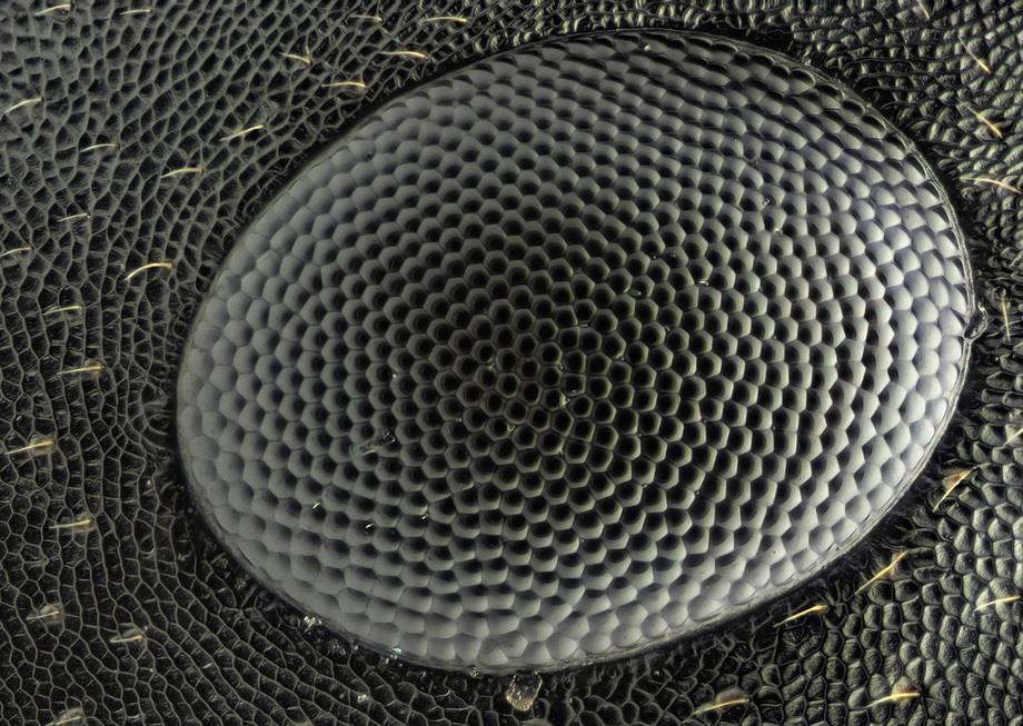 insects19 Портреты насекомых