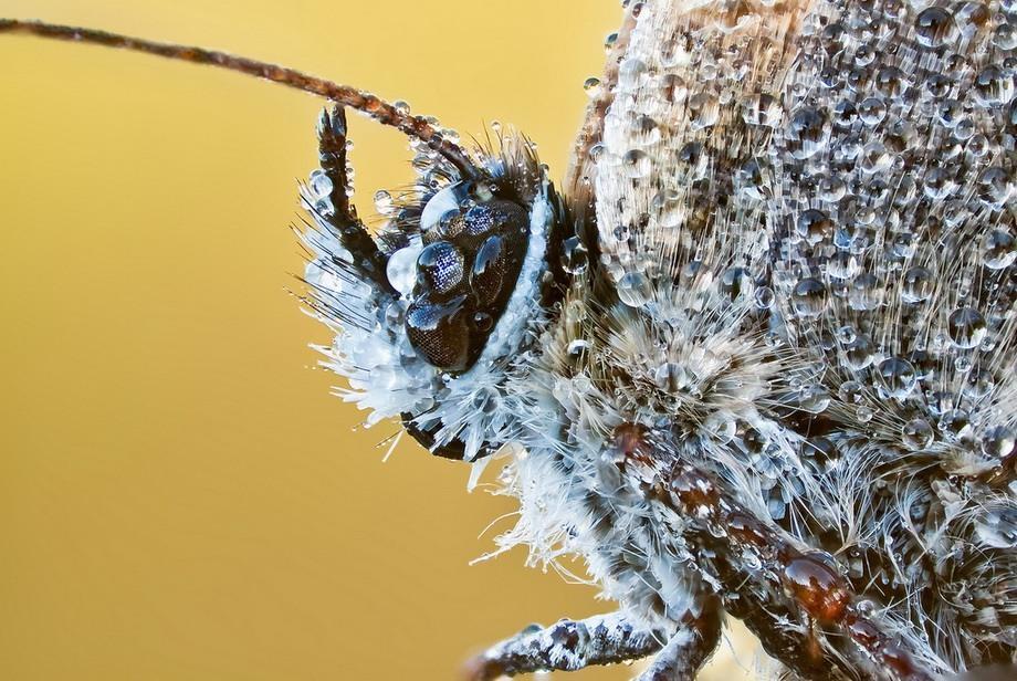 insects22 Портреты насекомых