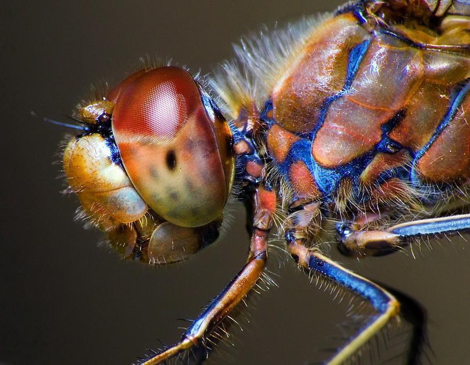 insects24 Портреты насекомых