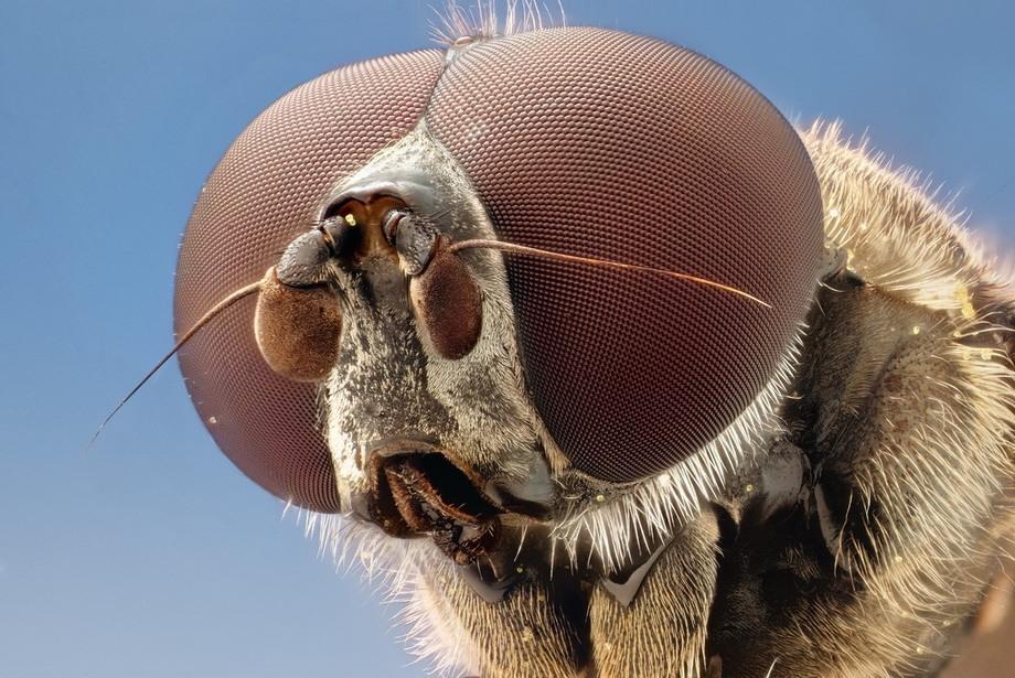 insects28 Портреты насекомых