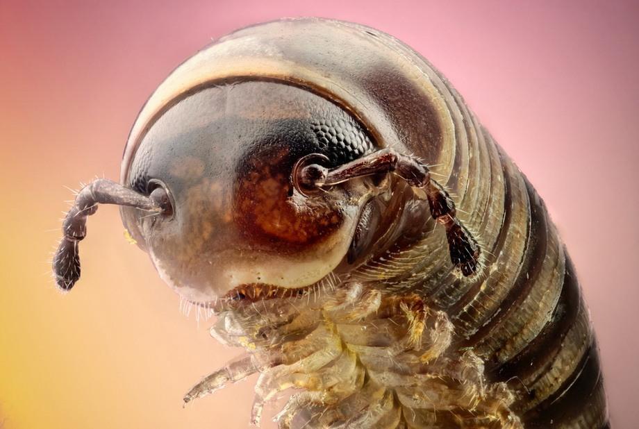 insects33 Портреты насекомых