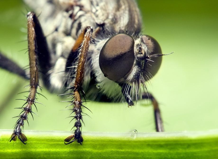 insects50 Портреты насекомых