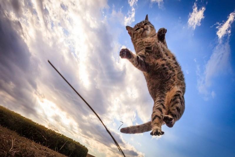 Удивительные летающие кошки