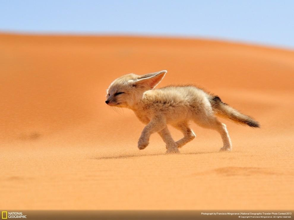 natgeocontest01 35 лучших фото животных на фотоконкурсе National Geographic Traveler
