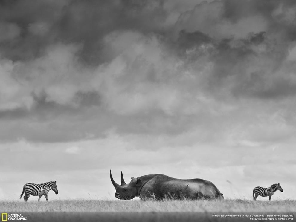 natgeocontest02 35 лучших фото животных на фотоконкурсе National Geographic Traveler