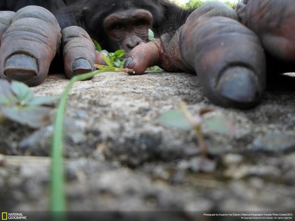 natgeocontest03 35 лучших фото животных на фотоконкурсе National Geographic Traveler