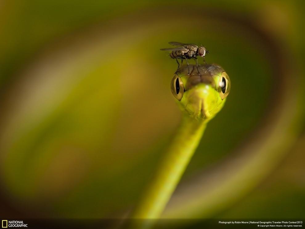 natgeocontest04 35 лучших фото животных на фотоконкурсе National Geographic Traveler