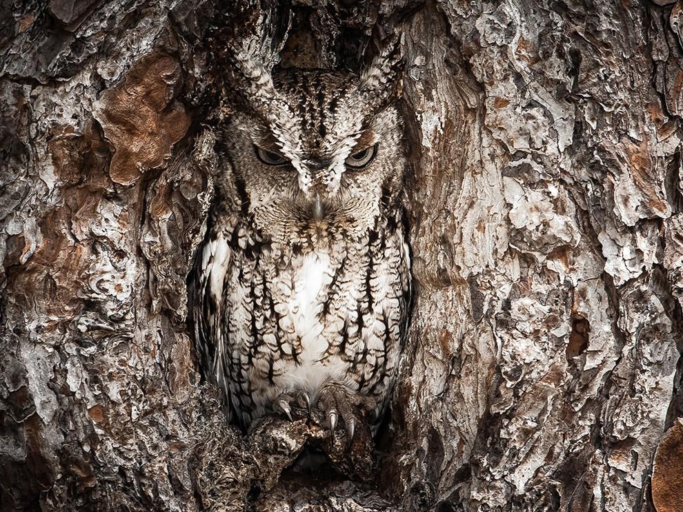 natgeocontest05 35 лучших фото животных на фотоконкурсе National Geographic Traveler