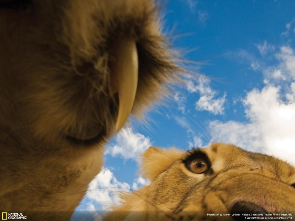 natgeocontest06 35 лучших фото животных на фотоконкурсе National Geographic Traveler