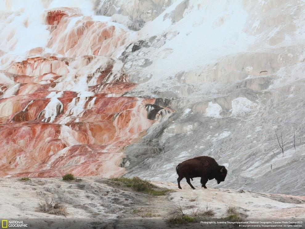 natgeocontest07 35 лучших фото животных на фотоконкурсе National Geographic Traveler