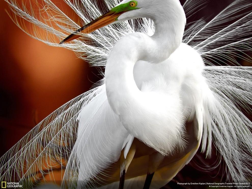 natgeocontest08 35 лучших фото животных на фотоконкурсе National Geographic Traveler