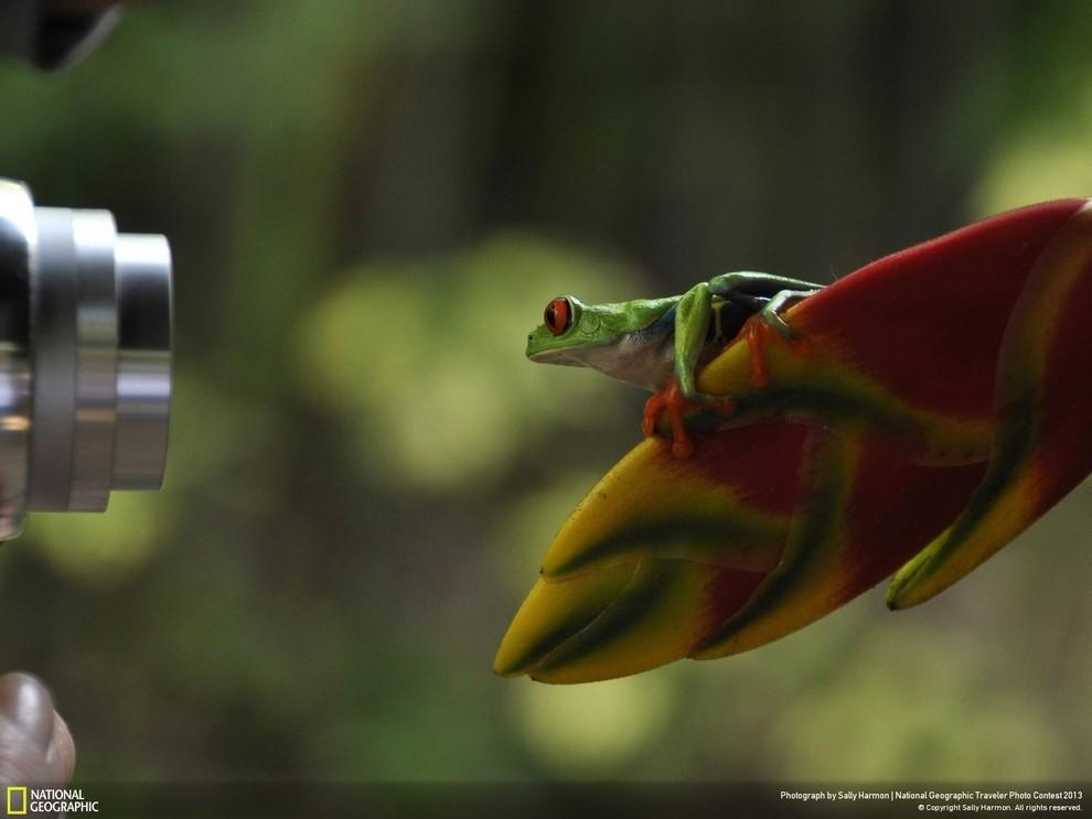 natgeocontest09 35 лучших фото животных на фотоконкурсе National Geographic Traveler