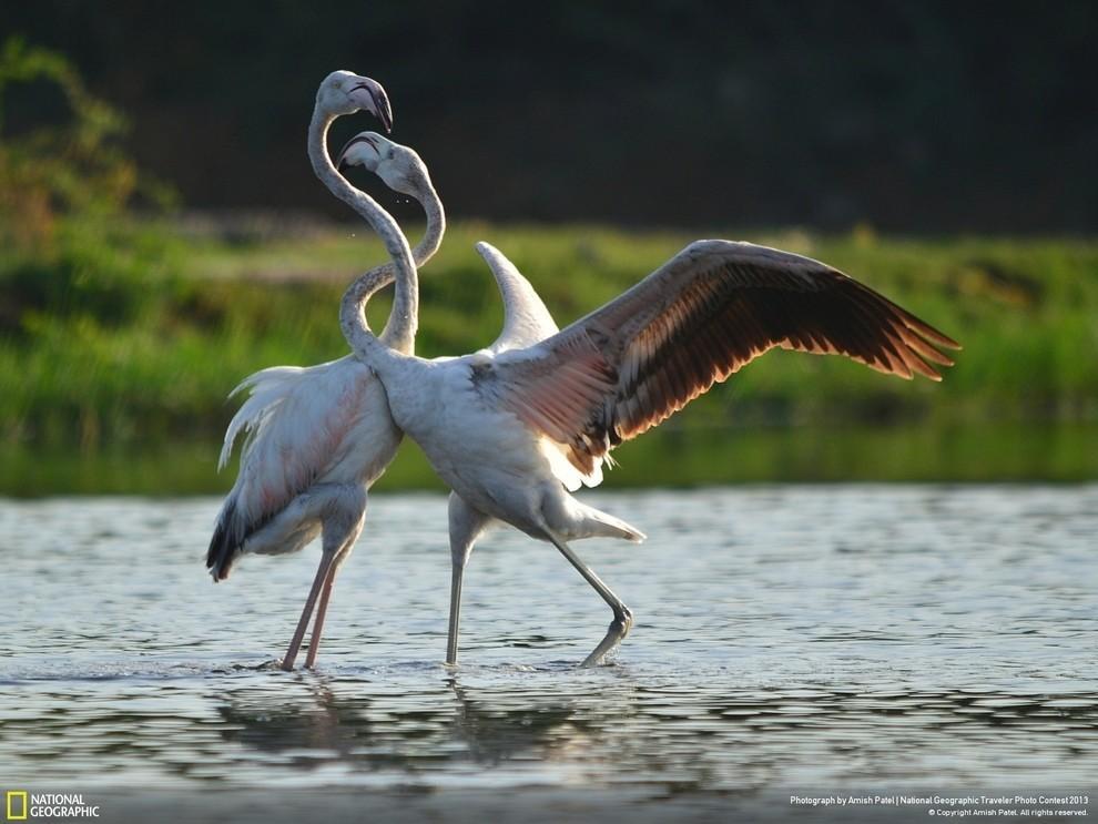 natgeocontest10 35 лучших фото животных на фотоконкурсе National Geographic Traveler