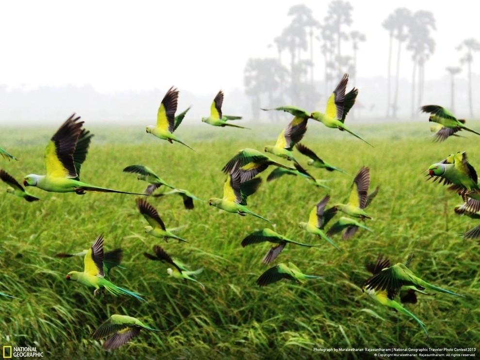 natgeocontest11 35 лучших фото животных на фотоконкурсе National Geographic Traveler