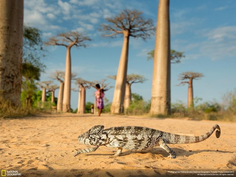 natgeocontest12 35 лучших фото животных на фотоконкурсе National Geographic Traveler