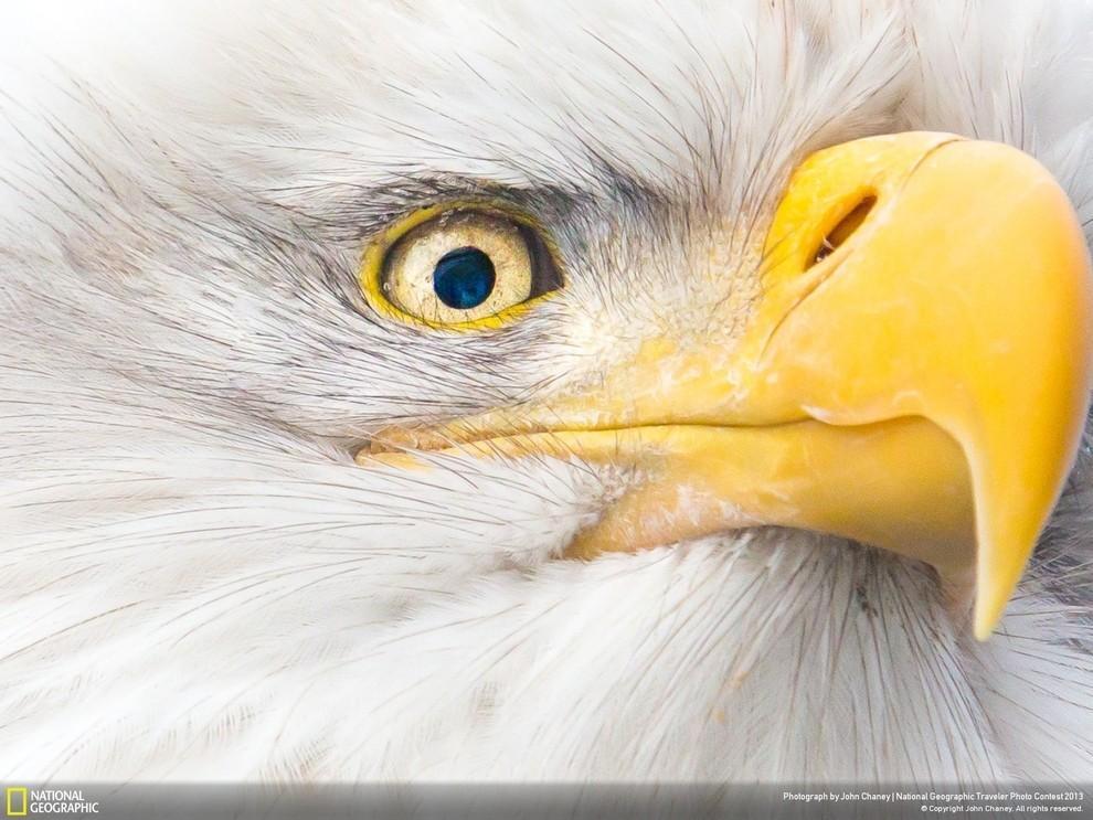 natgeocontest13 35 лучших фото животных на фотоконкурсе National Geographic Traveler
