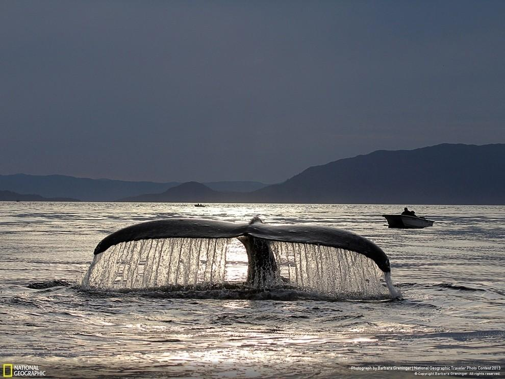 natgeocontest14 35 лучших фото животных на фотоконкурсе National Geographic Traveler