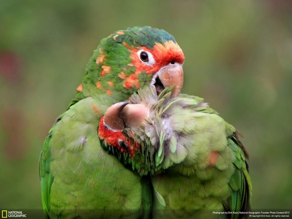 natgeocontest15 35 лучших фото животных на фотоконкурсе National Geographic Traveler