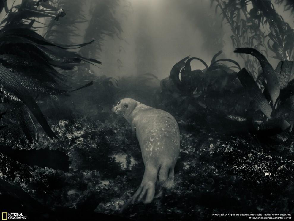 natgeocontest16 35 лучших фото животных на фотоконкурсе National Geographic Traveler