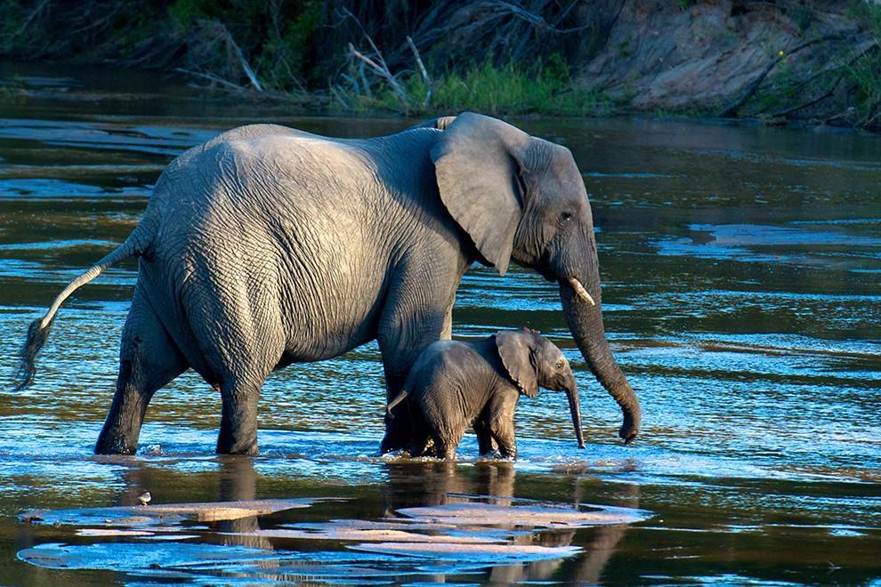 natgeocontest17 35 лучших фото животных на фотоконкурсе National Geographic Traveler