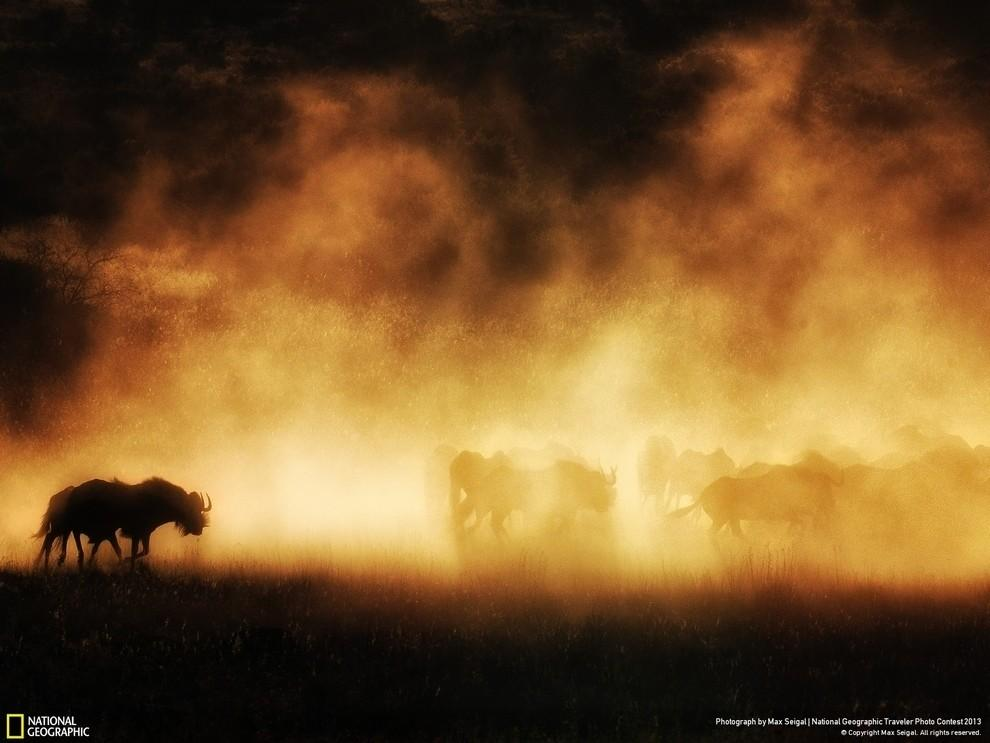 natgeocontest18 35 лучших фото животных на фотоконкурсе National Geographic Traveler