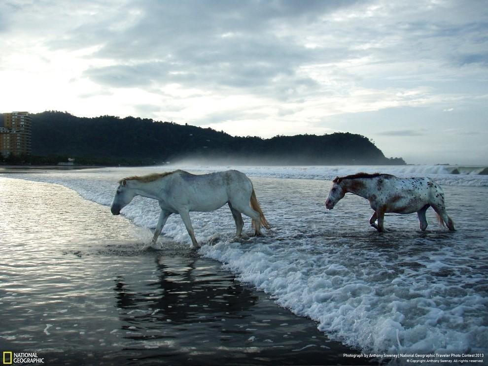 natgeocontest19 35 лучших фото животных на фотоконкурсе National Geographic Traveler