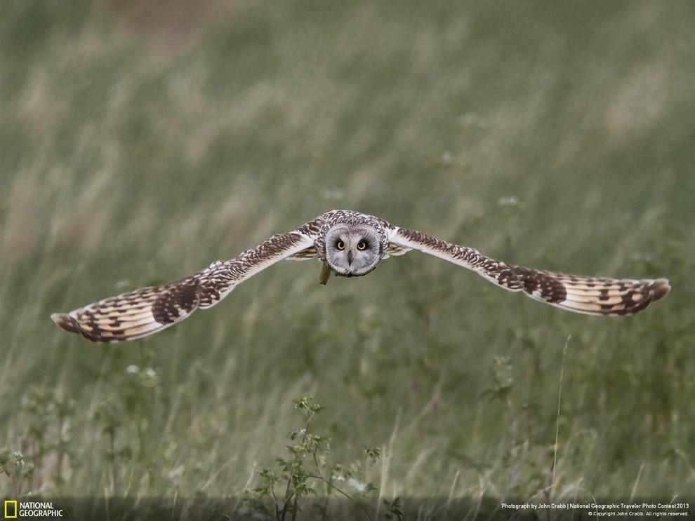 natgeocontest20 35 лучших фото животных на фотоконкурсе National Geographic Traveler