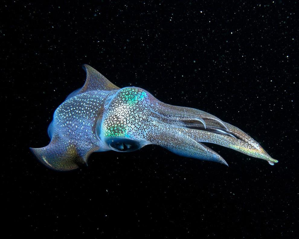 natgeocontest21 35 лучших фото животных на фотоконкурсе National Geographic Traveler
