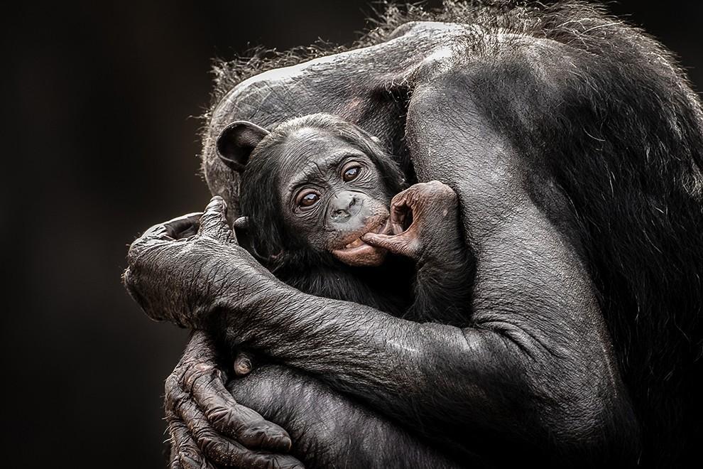 natgeocontest22 35 лучших фото животных на фотоконкурсе National Geographic Traveler