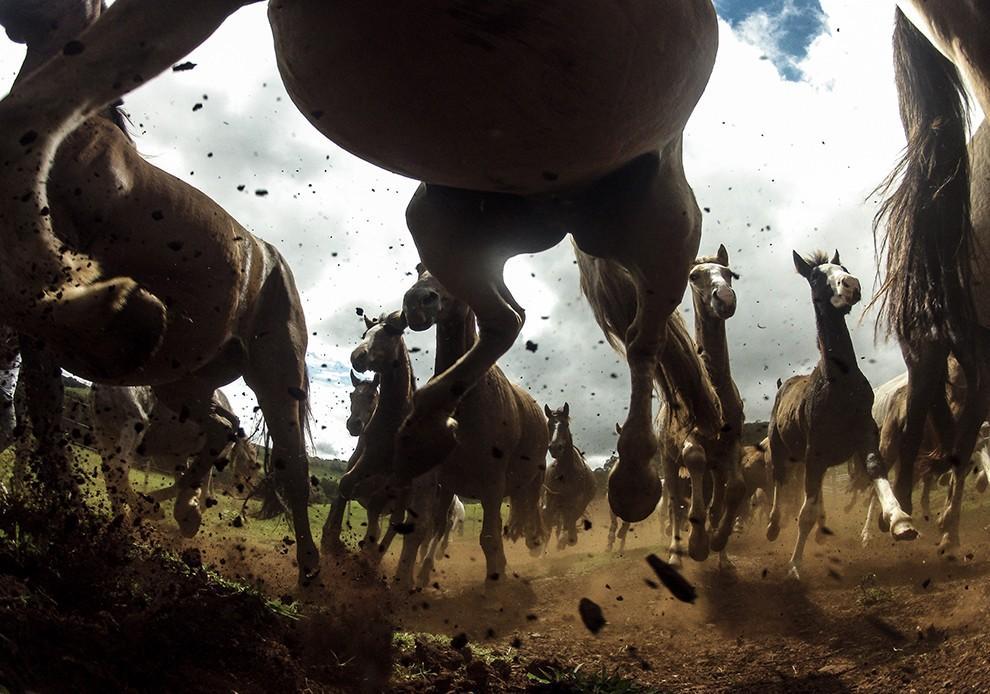 natgeocontest23 35 лучших фото животных на фотоконкурсе National Geographic Traveler