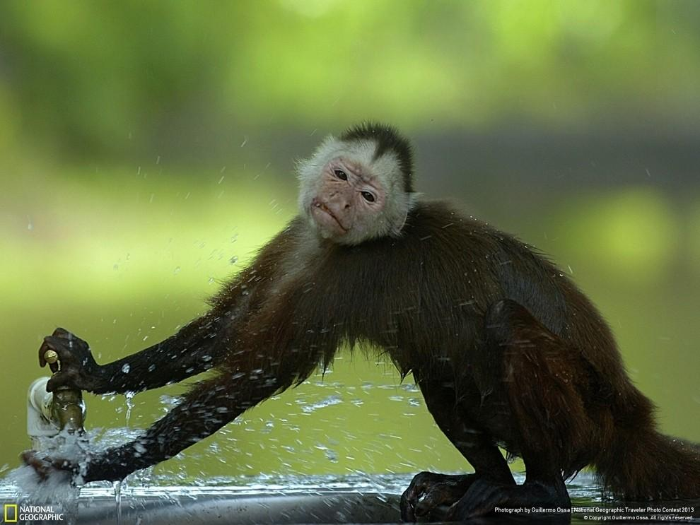 natgeocontest24 35 лучших фото животных на фотоконкурсе National Geographic Traveler