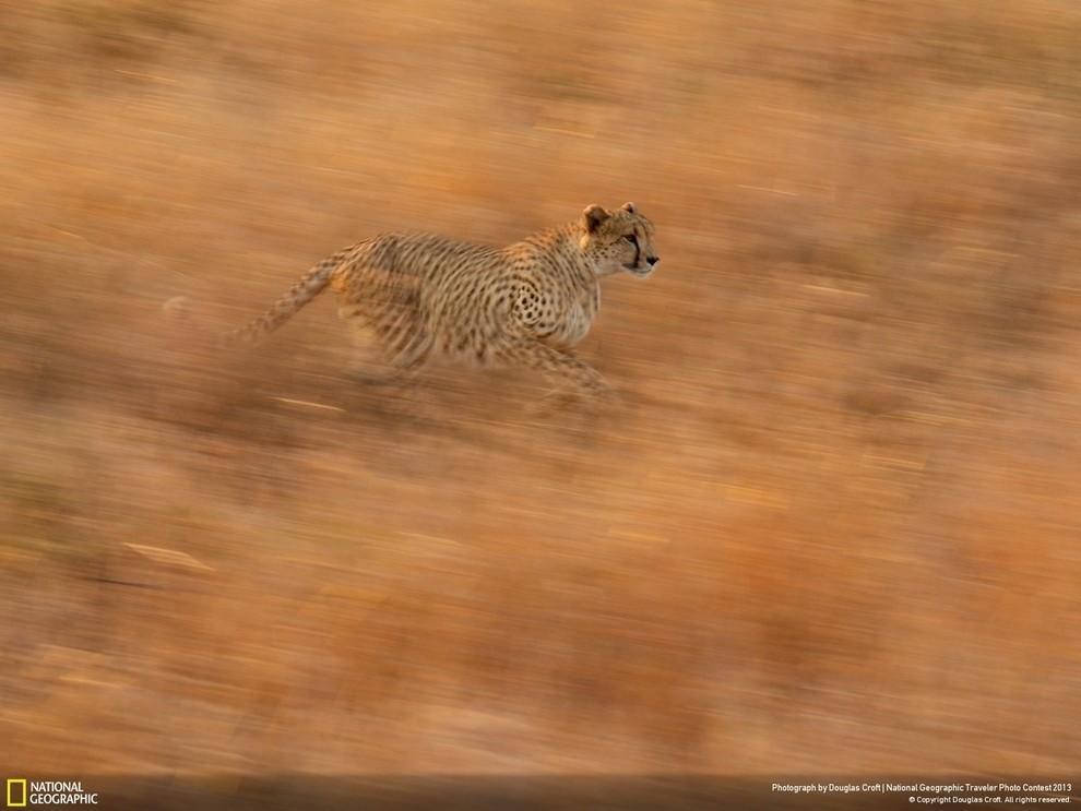natgeocontest26 35 лучших фото животных на фотоконкурсе National Geographic Traveler