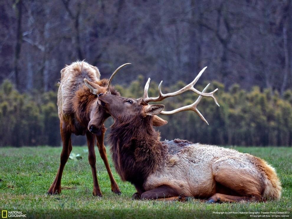 natgeocontest27 35 лучших фото животных на фотоконкурсе National Geographic Traveler