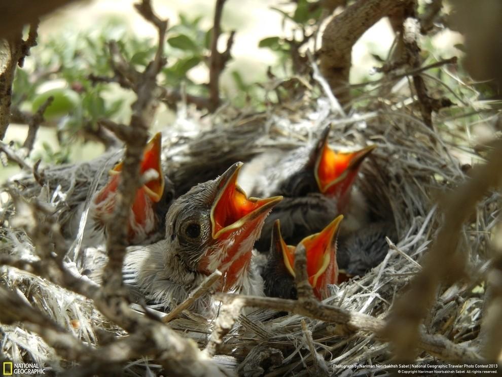 natgeocontest28 35 лучших фото животных на фотоконкурсе National Geographic Traveler