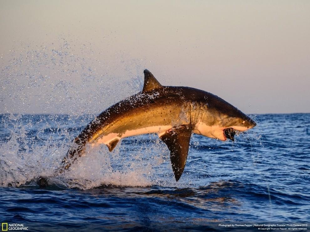 natgeocontest33 35 лучших фото животных на фотоконкурсе National Geographic Traveler