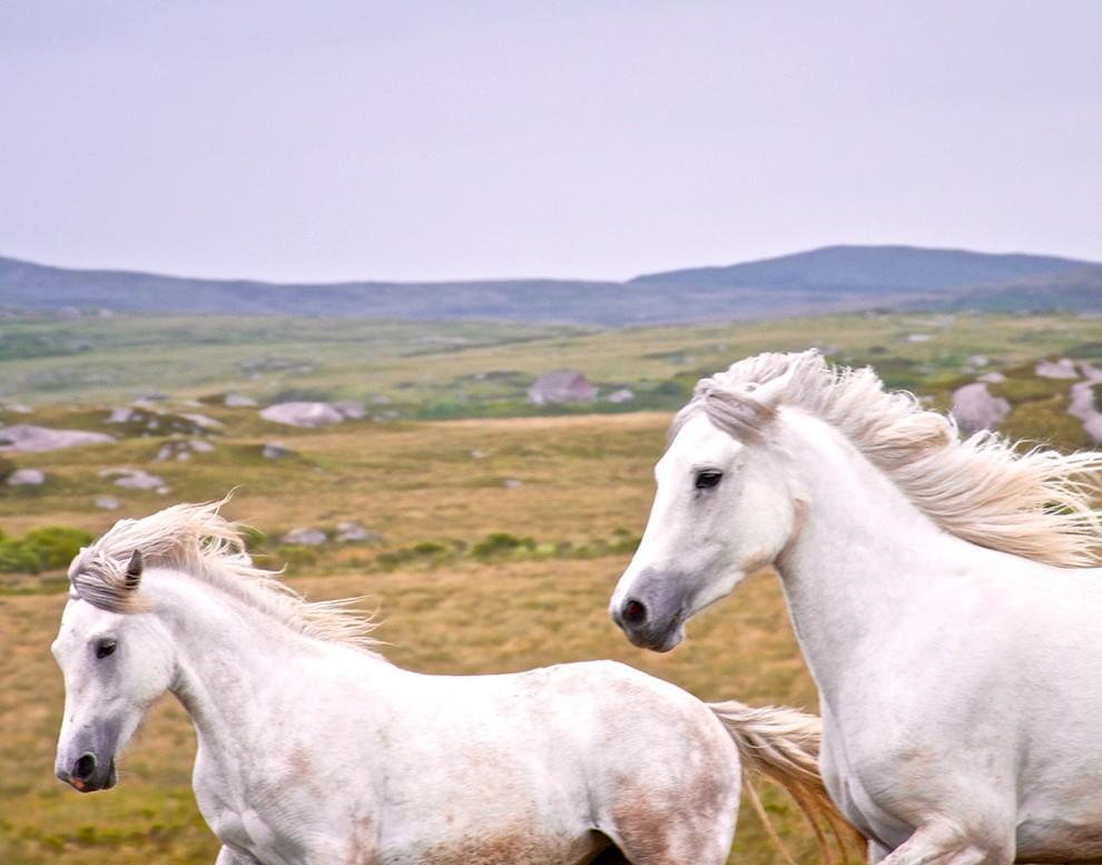natgeocontest34 35 лучших фото животных на фотоконкурсе National Geographic Traveler