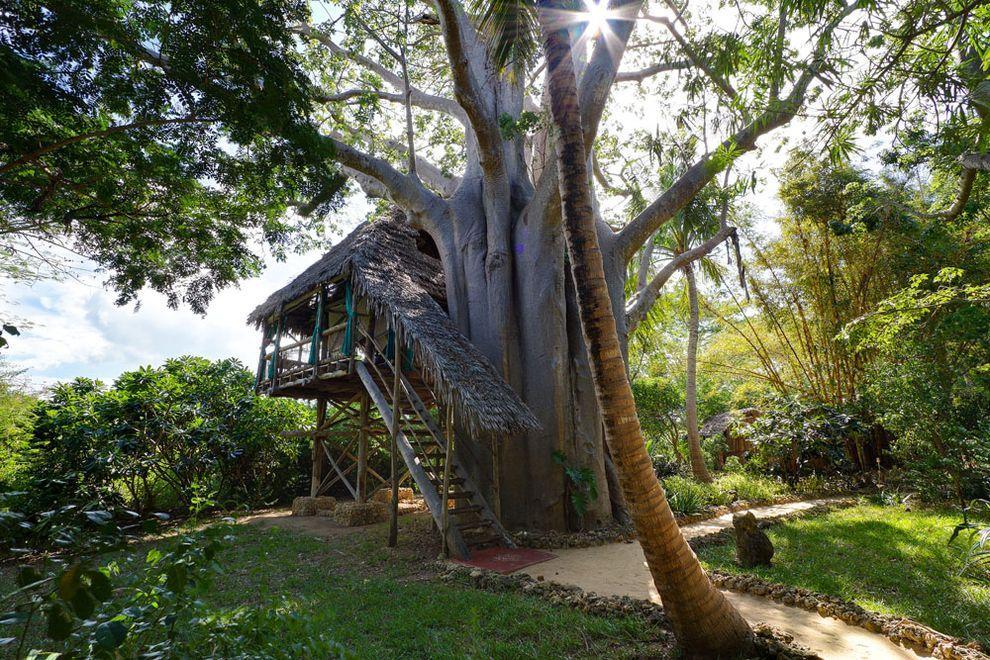 ontrees07 10 самых удивительных отелей на деревьях