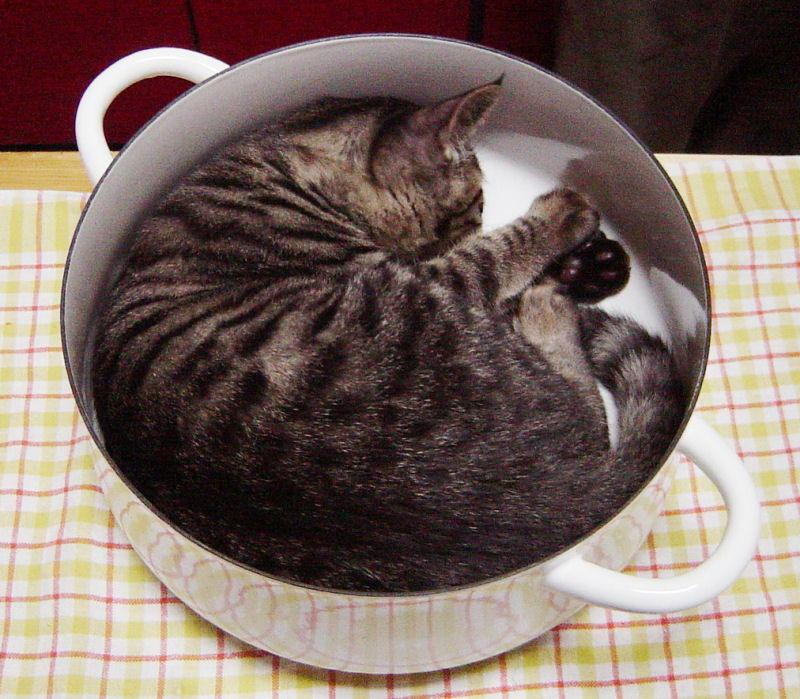 Забыл вчера кота покормить.  Утром просыпаюсь, чем-то гремит на кухне.  Наверное, готовит.
