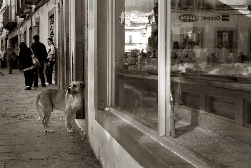 2009 professional 00000858 photo01 resized Выразительные и трогательные портреты уличных собак
