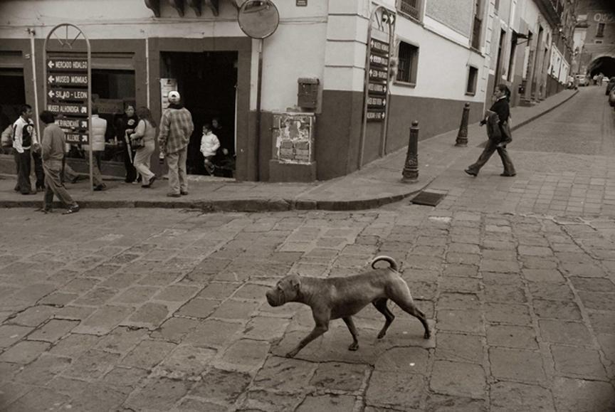 2009 professional 00000858 photo07 resized Выразительные и трогательные портреты уличных собак