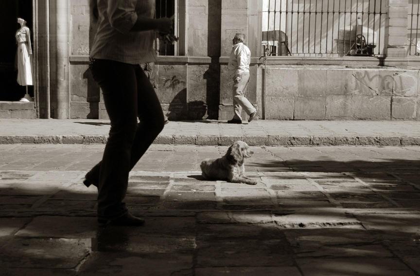 2009 professional 00000858 photo09 resized Выразительные и трогательные портреты уличных собак