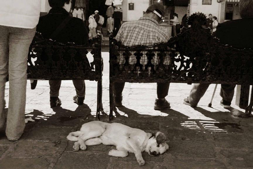 5887492 Выразительные и трогательные портреты уличных собак