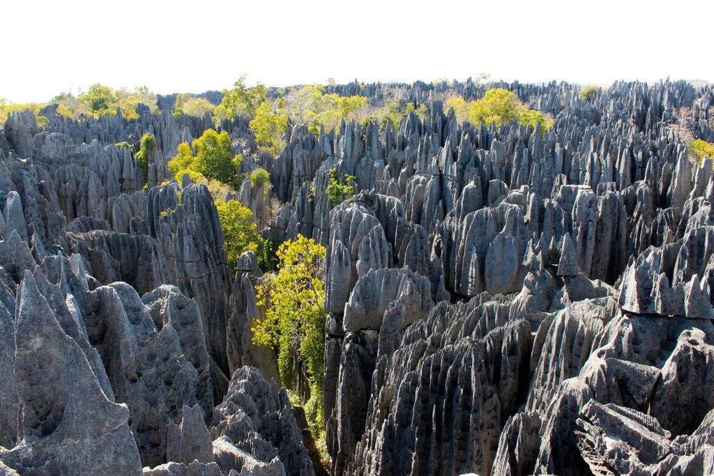 8021612955 b3835284fa b Каменный лес на Мадагаскаре