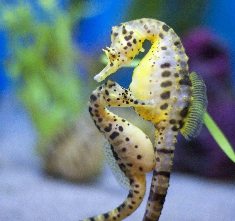 AnimalFacts11 Факты о животных, которые поднимут вам настроение