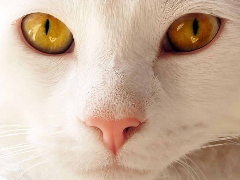 AnimalFacts17 Факты о животных, которые поднимут вам настроение